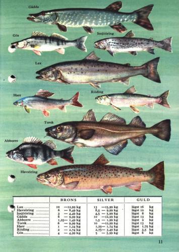 ABU Napp och nytt 1959 Blad013